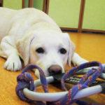 Собаки-поводыри: они спасают жизни