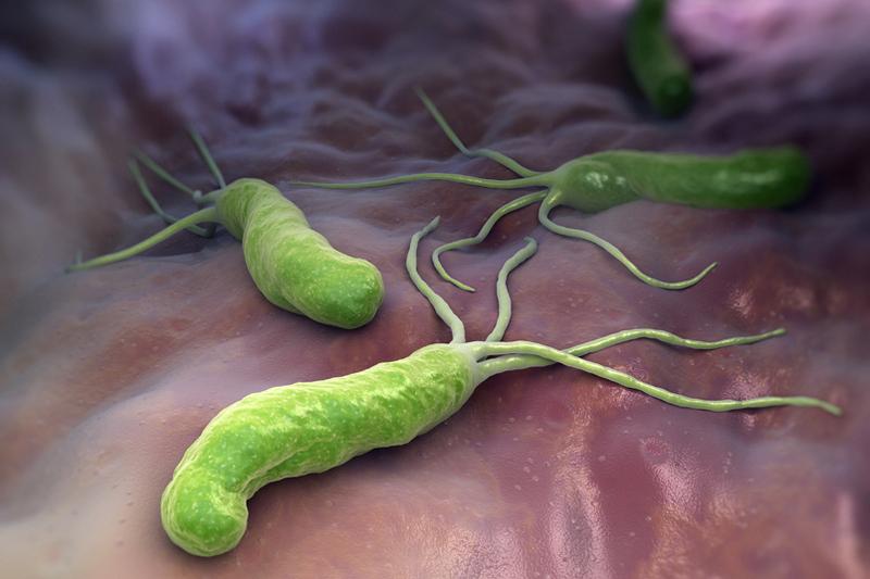 Бактерии Helicobacter pylori любят соленую среду